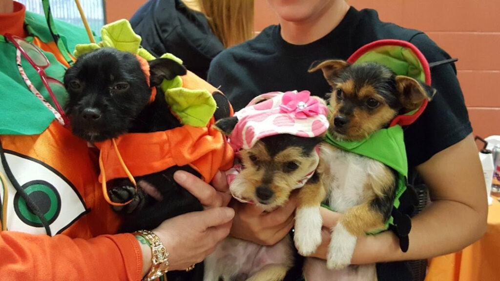puppies in halloween costumes
